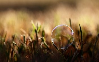 Photography - Bubble Wallpapers and Backgrounds ID : 152140