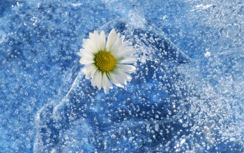 Photography - Artistic Wallpapers and Backgrounds ID : 152702