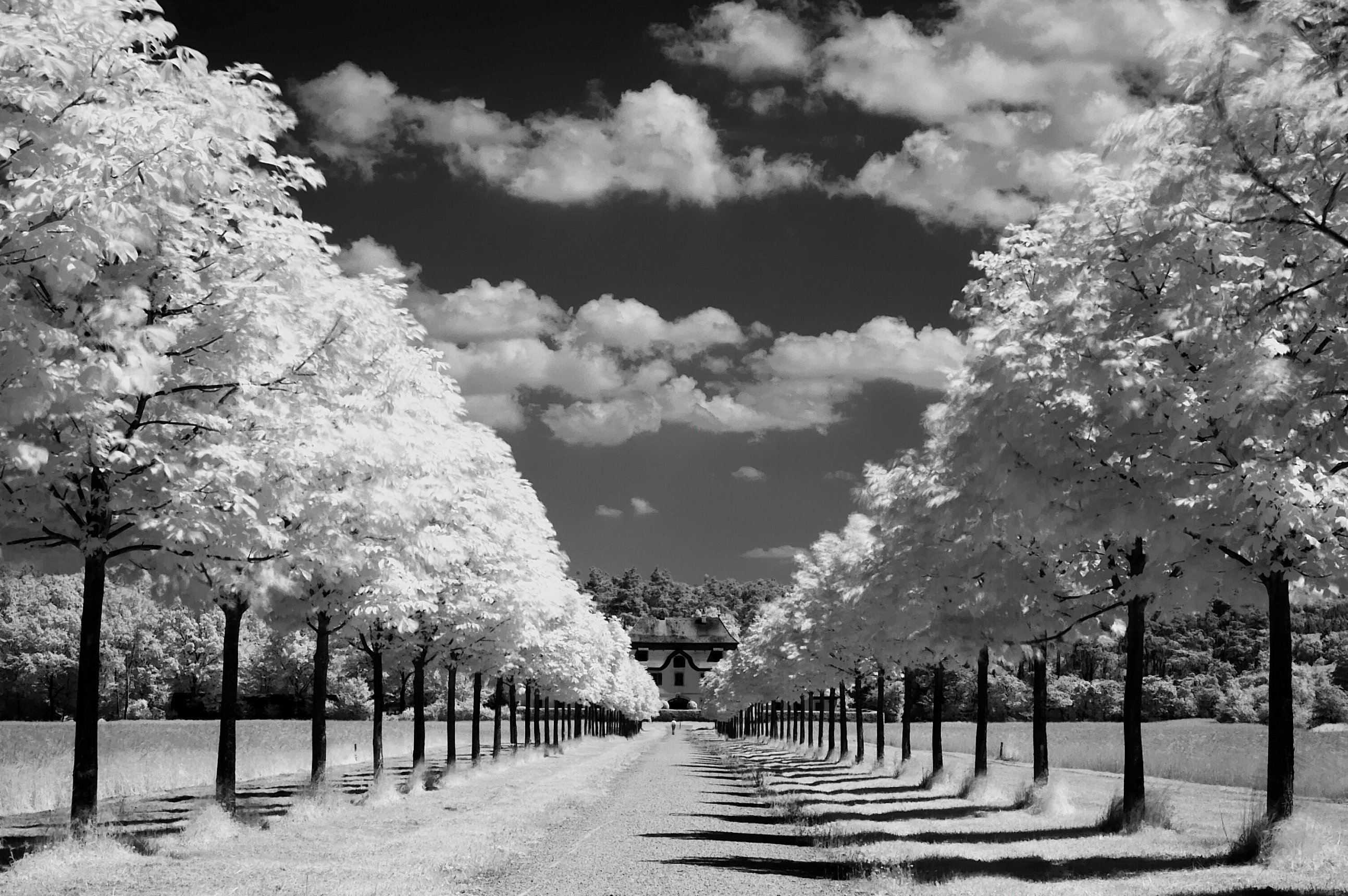 Black White Earth Lake Lonely Tree Nature HD Wallpaper