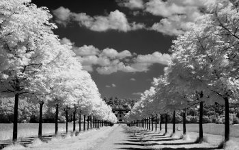 Photography - Black & White Wallpapers and Backgrounds ID : 153972