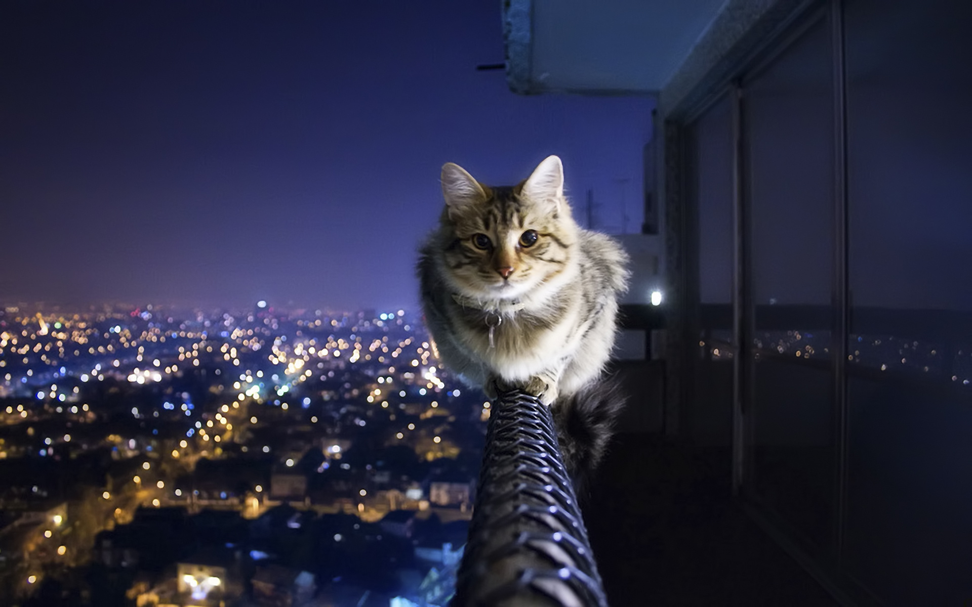 Cat Balancing Act Tapeta Hd Tło 1920x1200 Id157232