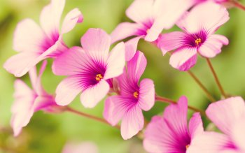 Earth - Flower Wallpapers and Backgrounds ID : 157290