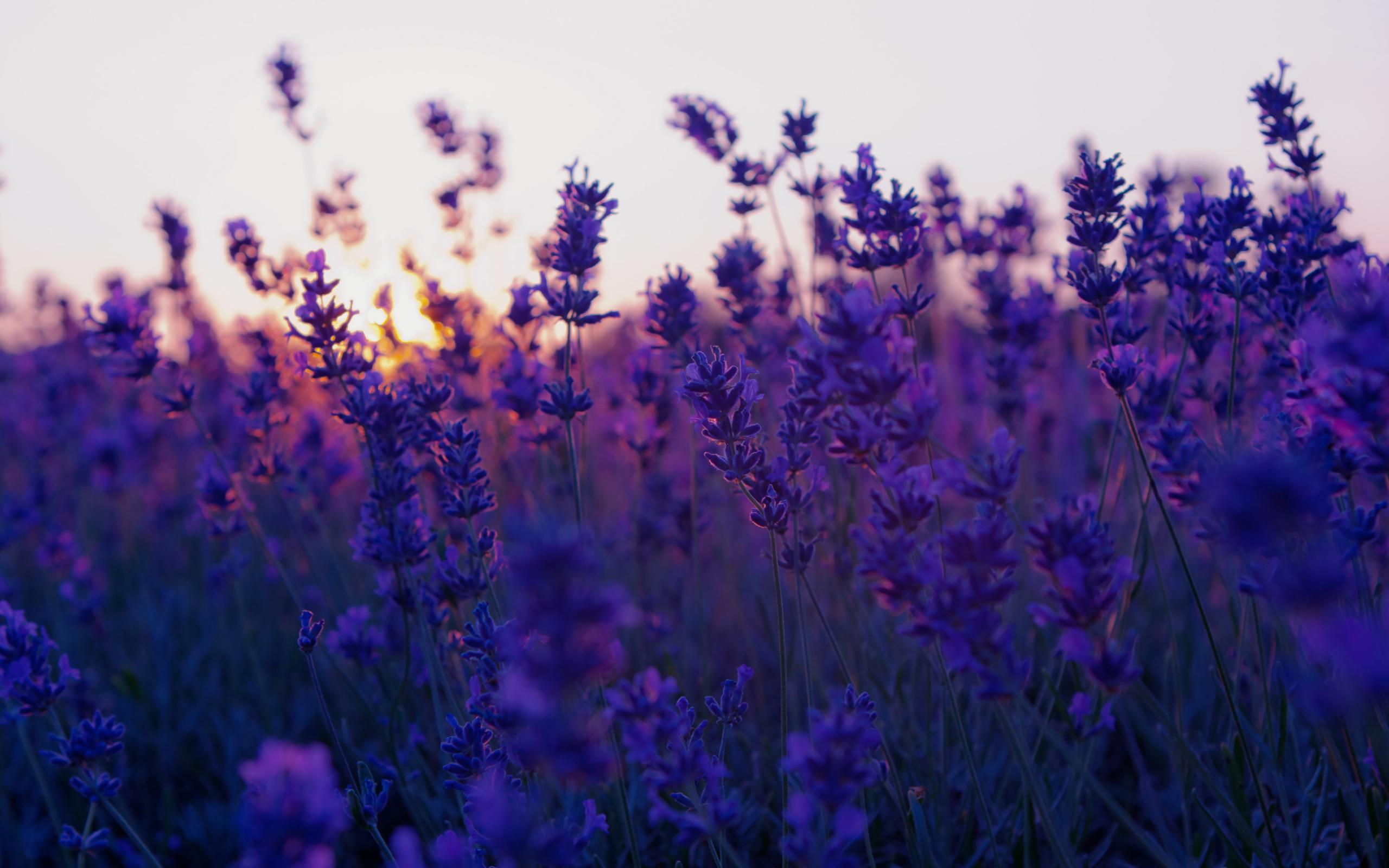 цветы обои картинки
