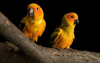 Animal - Parrot Wallpapers and Backgrounds ID : 160400