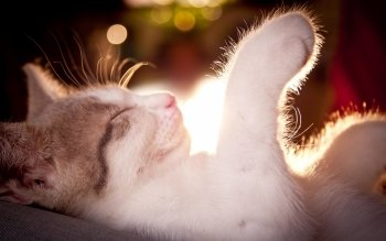 Animal - Cat Wallpapers and Backgrounds ID : 169812