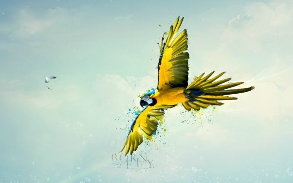 Animal CGI Blue-And-Yellow Macaw HD Wallpaper   Background Image