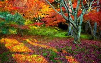 Tierra - Otoño Wallpapers and Backgrounds ID : 176152