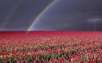 Earth - Rainbow Wallpapers and Backgrounds ID : 177702