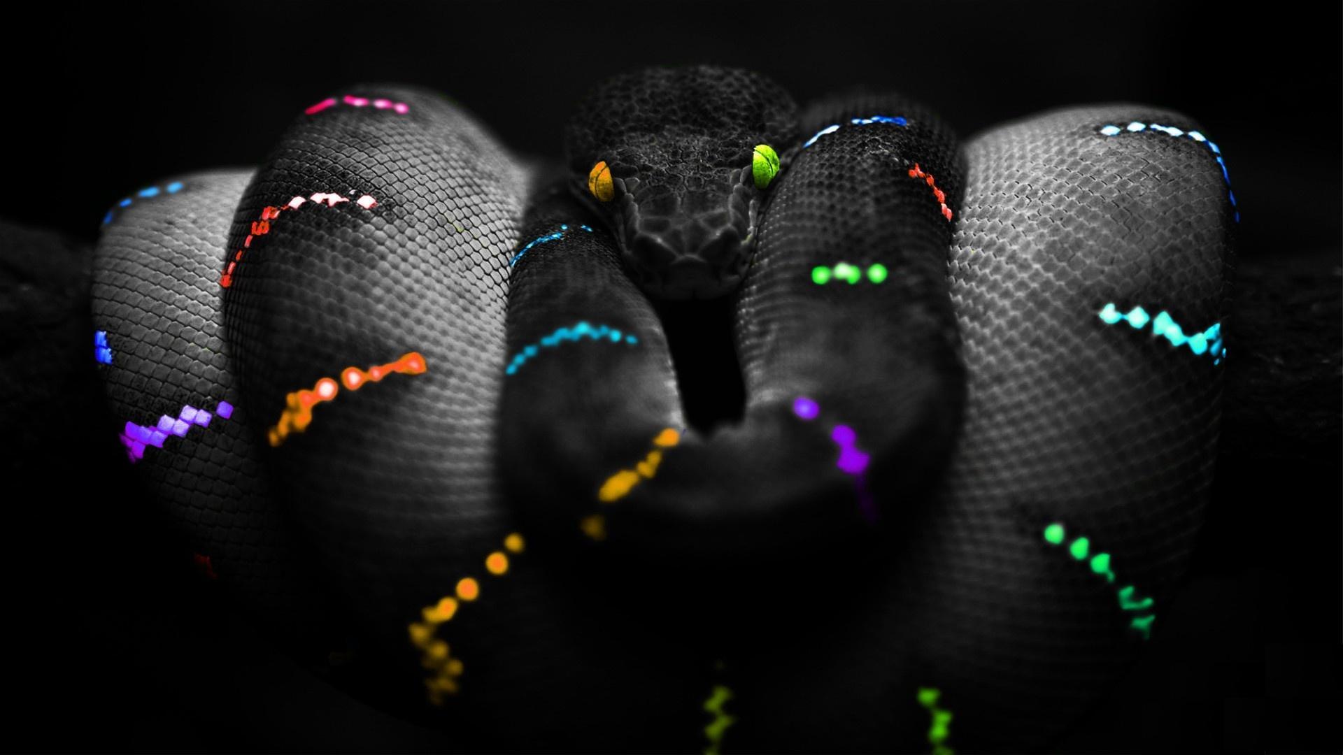 Hd Wallpaper Of Black Snake: Achtergronden - Wallpaper Abyss