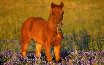 Animalia - Caballo Wallpapers and Backgrounds ID : 179670