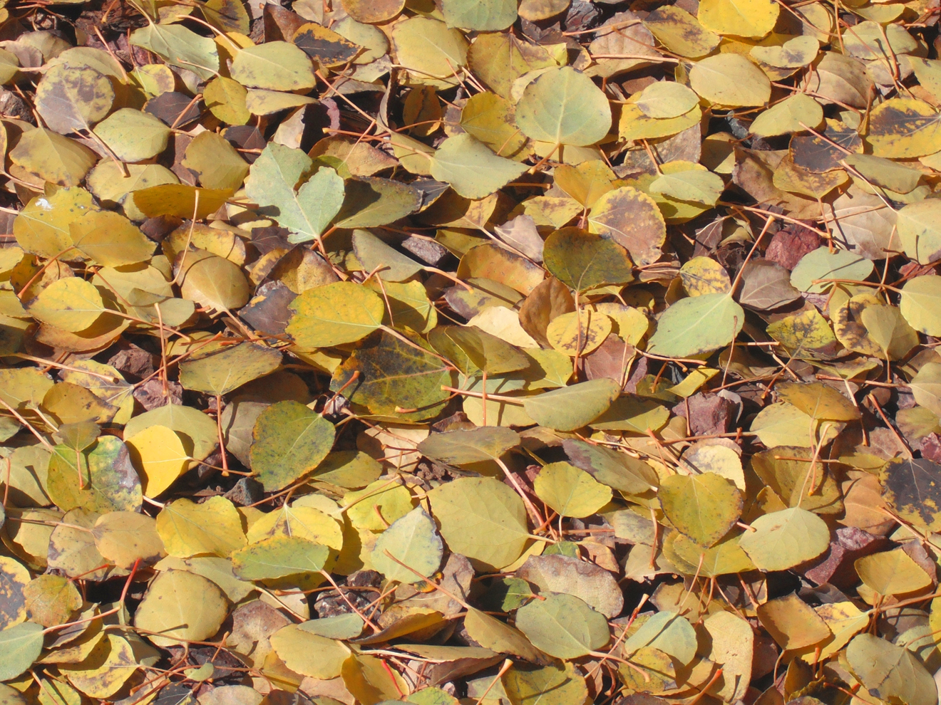 Earth - Leaf  Carpet Of Leaves Nature Wallpaper