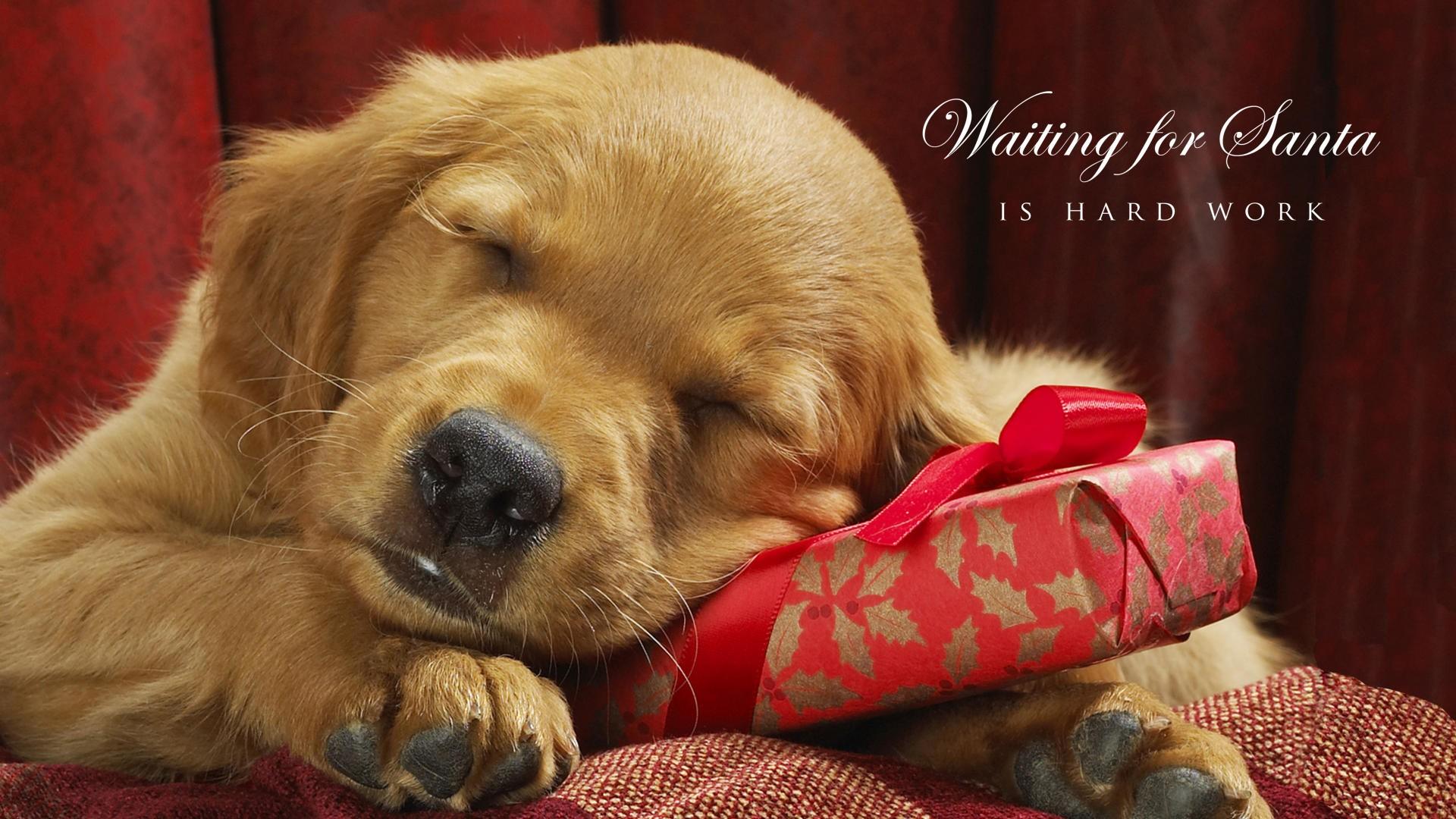 Christmas HD Wallpaper | Background Image | 1920x1080 | ID ...