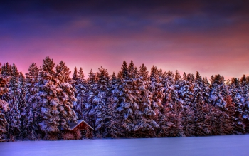Photography - Winter Wallpapers and Backgrounds ID : 194462