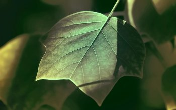 Earth - Leaf Wallpapers and Backgrounds ID : 195770