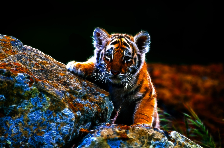 Imagen De Dibujo 3d De Gato Para Fondo De Pantalla: Tiger HD Wallpaper
