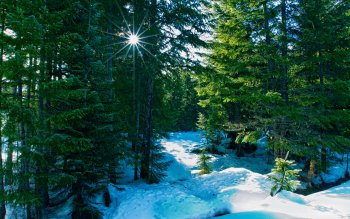 Earth - Winter Wallpapers and Backgrounds ID : 204720