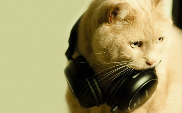 Animal Cat Cats Headphones Funny Humor HD Wallpaper | Background Image