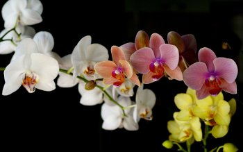 Earth - Orchid Wallpapers and Backgrounds ID : 210460