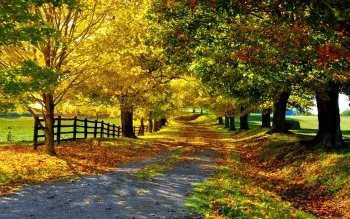 Photography - Autumn Wallpapers and Backgrounds ID : 212882