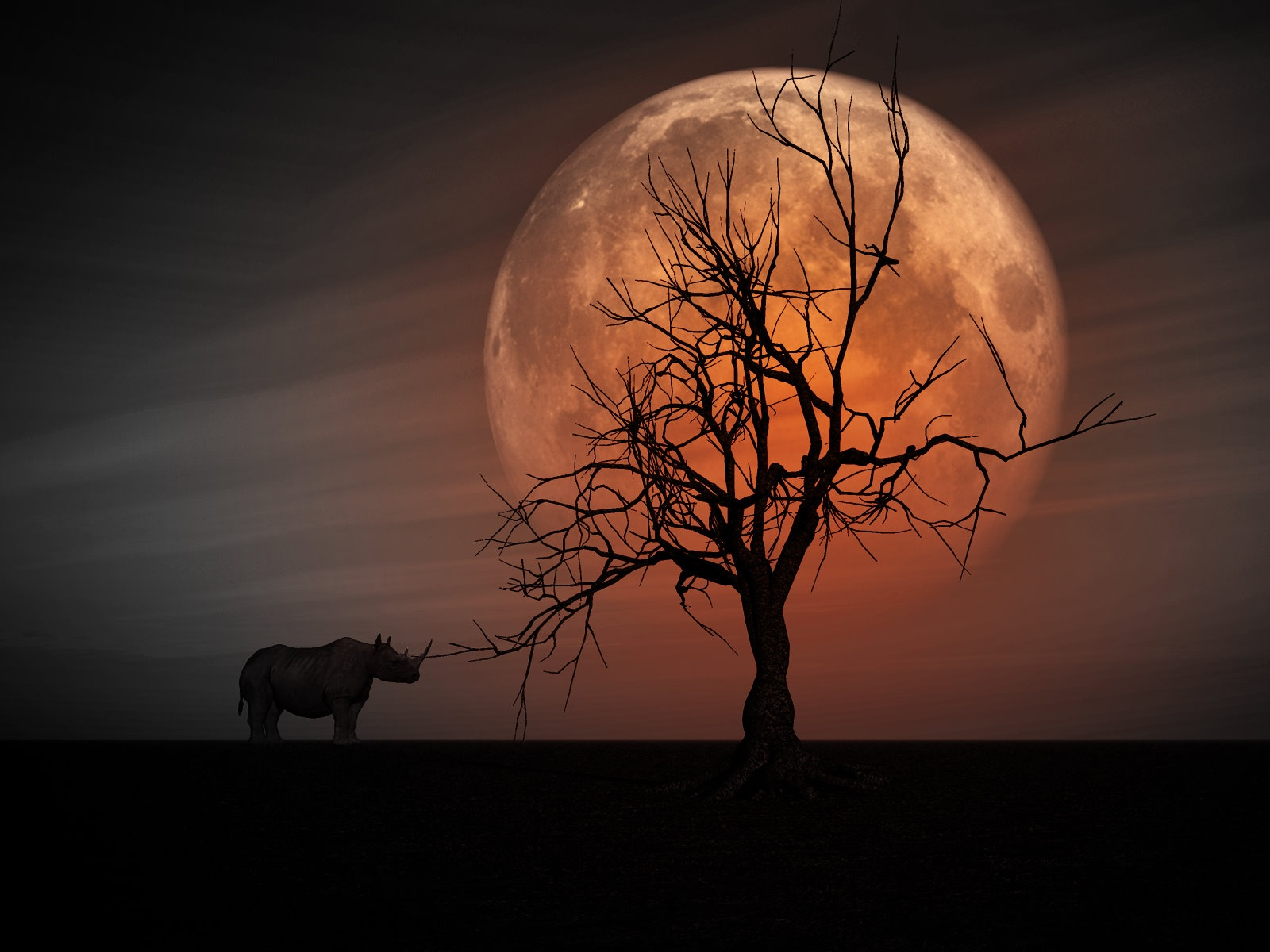 Rhino wallpaper and background image 1600x1200 id 216480 for Art and photography websites