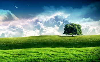Earth - Tree Wallpapers and Backgrounds ID : 216320