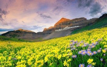 Earth - Flower Wallpapers and Backgrounds ID : 217560