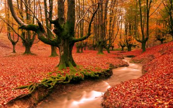 Earth - Autumn Wallpapers and Backgrounds ID : 218940