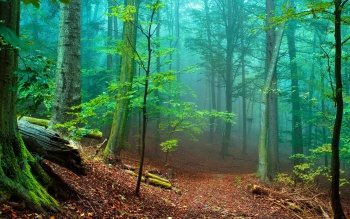 Erde - Wald Wallpapers and Backgrounds ID : 219500