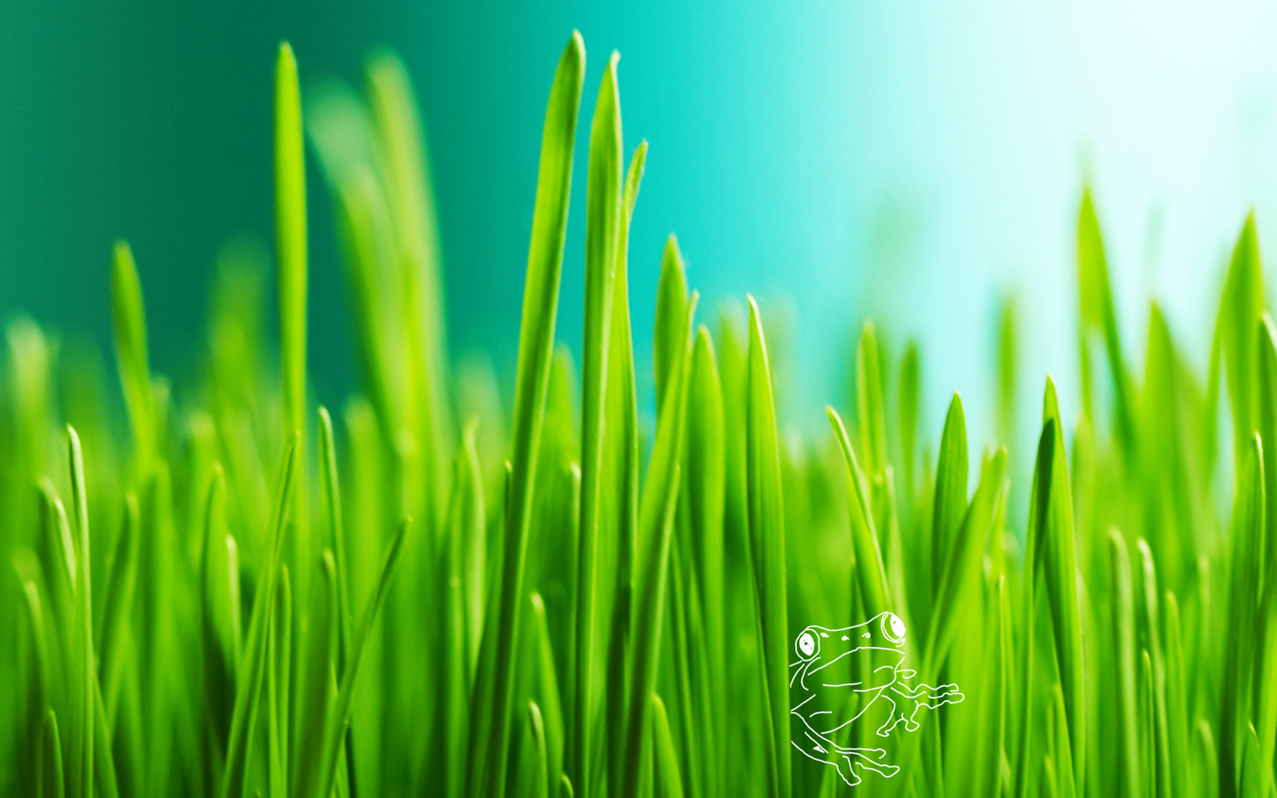 Grass full hd wallpaper and background image 2560x1600 for Pretty grass