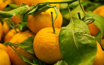 Food - Orange Wallpapers and Backgrounds ID : 223760