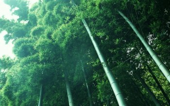 Tierra - Bamboo Wallpapers and Backgrounds ID : 234280