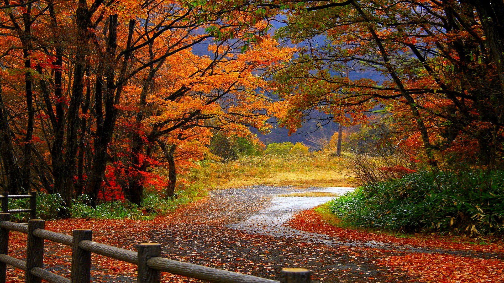 Fall Hd Wallpaper Background Image 1920x1080 Id 235242 Wallpaper Abyss