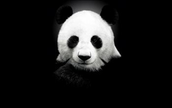 Animal - Panda Wallpapers and Backgrounds ID : 235502