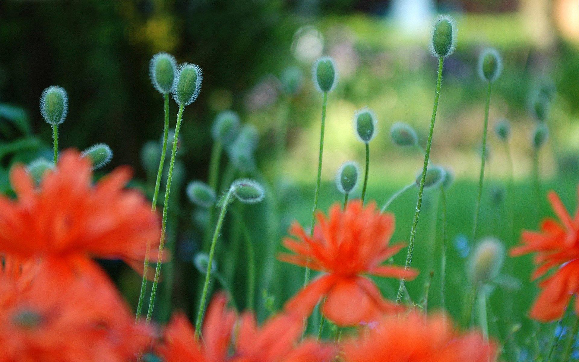 Jorden/Natur - Flower  Bakgrund