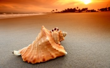 Terra - Shell Wallpapers and Backgrounds ID : 236812