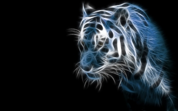 Animal - Tiger Wallpapers and Backgrounds ID : 237240
