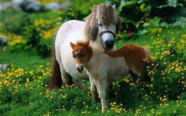 Animal Horse Tilt Shift HD Wallpaper | Background Image