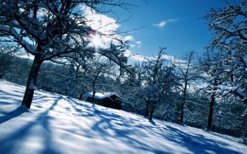 Photography - Winter Wallpapers and Backgrounds ID : 240950