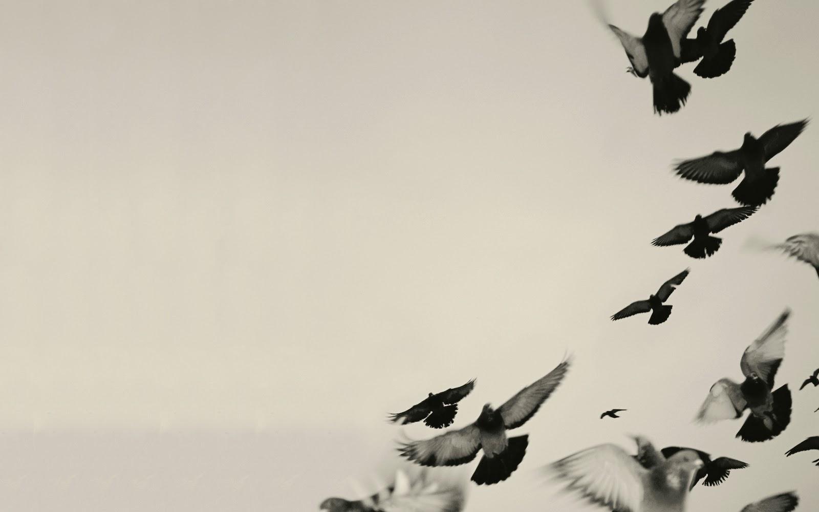 black wallpaper with birds image bear and bird photos pnkscambodia org