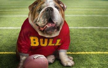 2 Georgia Bulldogs HD Wallpapers