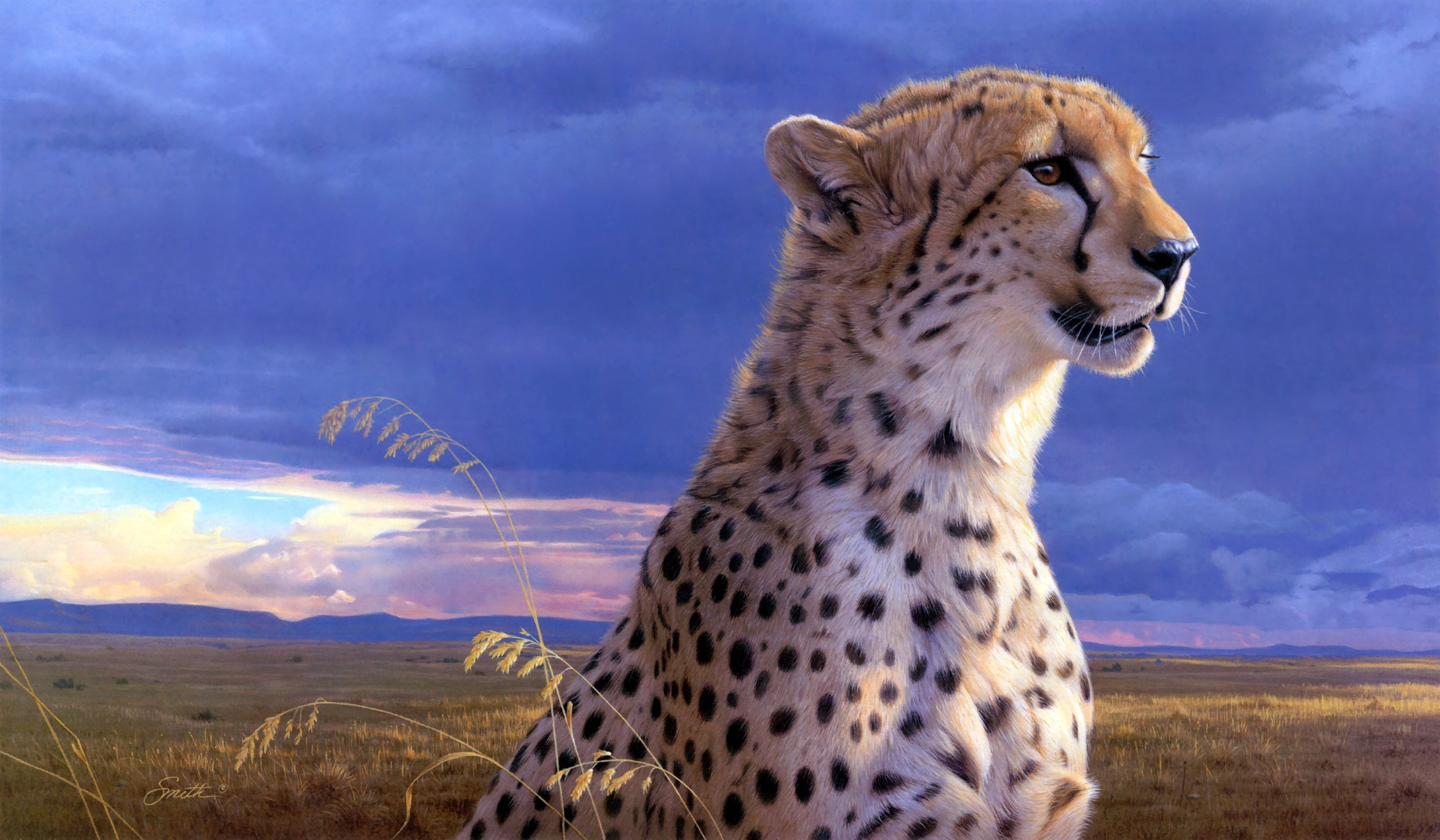 cheetah full hd wallpaper and background 2930x1710 id 249180. Black Bedroom Furniture Sets. Home Design Ideas
