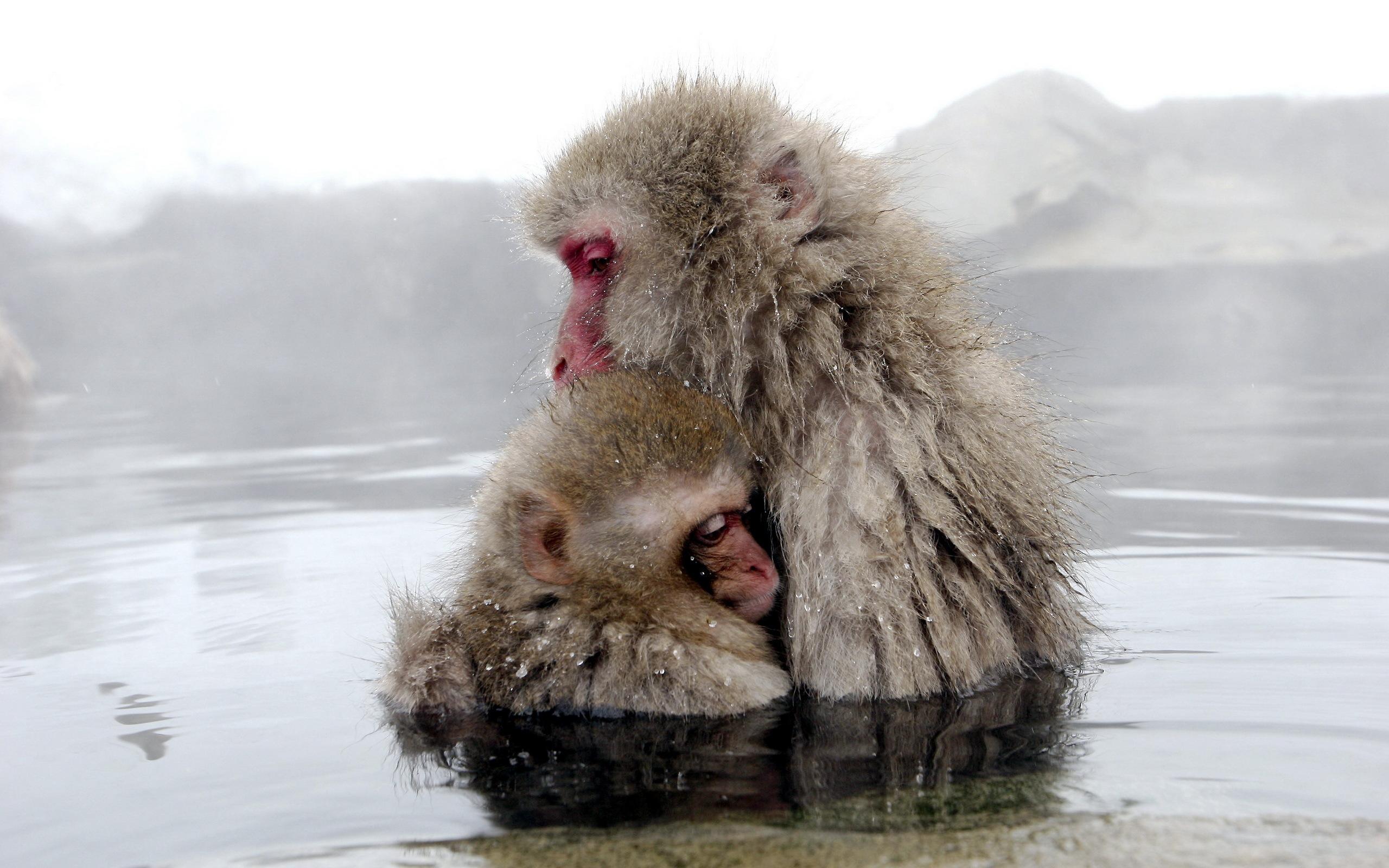 monkey wallpaper iphone