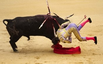 Sports - Bullfighting Wallpapers and Backgrounds ID : 249160