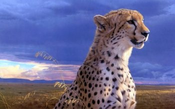 Tiere - Gepard Wallpapers and Backgrounds ID : 249180