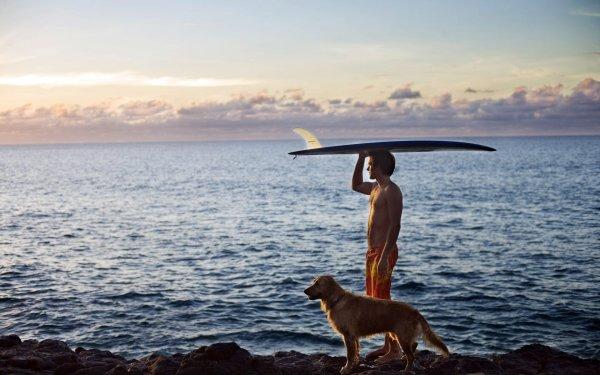 Sports Surfing Dog Man Surfboard Ocean HD Wallpaper   Background Image