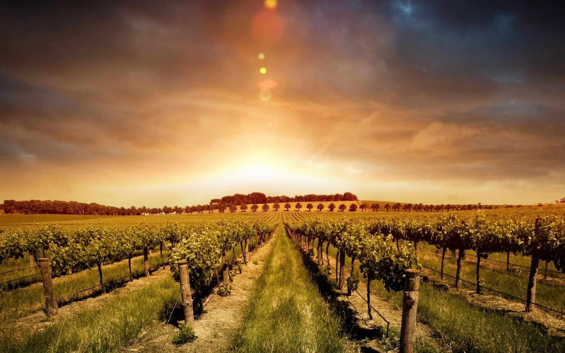 man made vineyard wallpaper