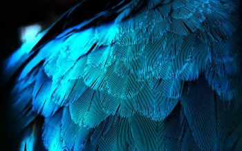 80 Feather Hd Wallpapers Background Images Wallpaper Abyss
