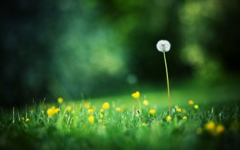 Earth - Dandelion Wallpapers and Backgrounds ID : 255832