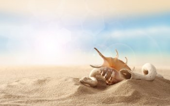 Earth - Shell Wallpapers and Backgrounds ID : 260652