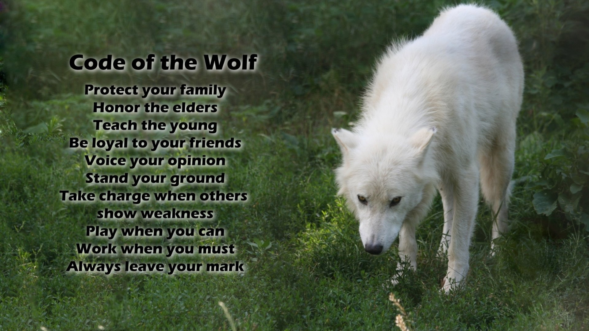 Animal - Wolf  Dog Word Animal White Wolf Wildlife Arctic Wolf Wallpaper